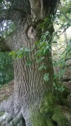 Hills tree 1